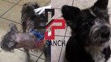 Vet Ranch на русском - Это одна и та же собака Is that even the same dog