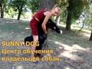 Что делать если собака проглотила мяч или чем то подавилась