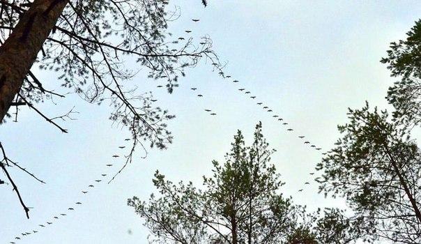 #фотоосень Снова птицы в стаи собираются..ждёт их за моря дорога дальн