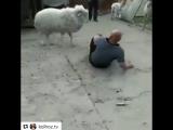 Два барана - [Веселые Кавказцы]