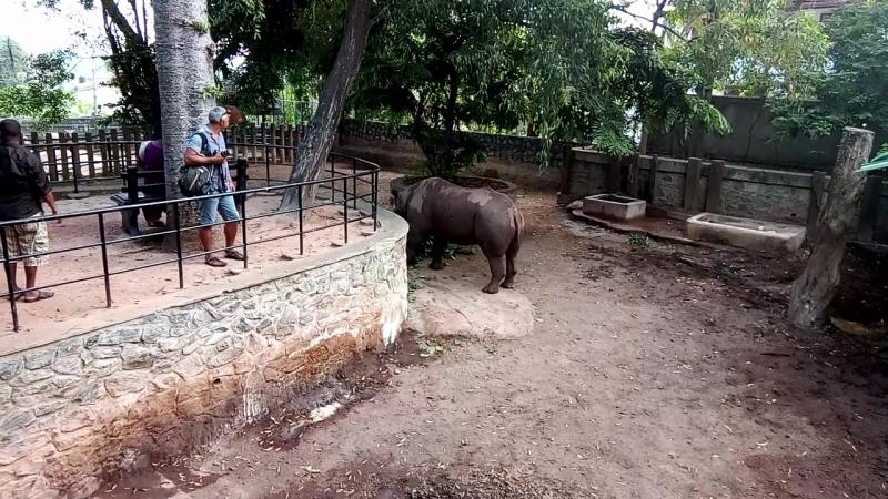 Носорог в зоопарке Коломбо