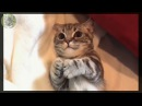 Смешные кошки приколы про кошек и котов 2017 Смешное видео этой осени