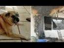 🔴Семья вернулась в сгоревший дом спустя 2 месяца И вдруг их пёс стал рыть пол