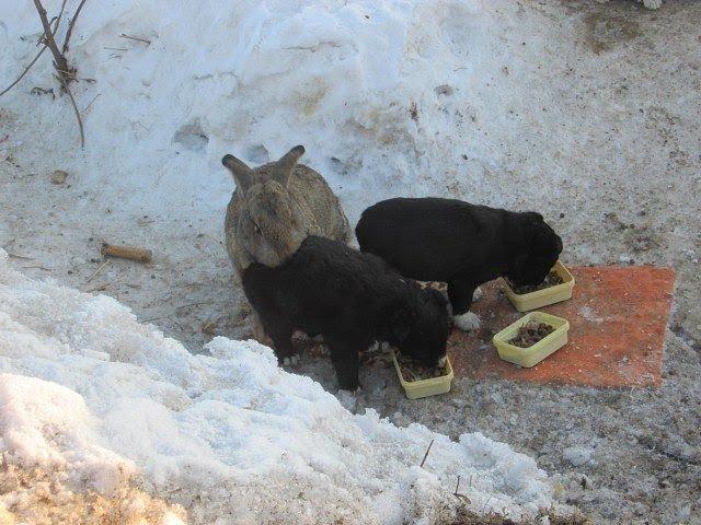 Кролик убежал из дома и поселился в норе с собакой А когда она погибла то он стал папой её щенкам