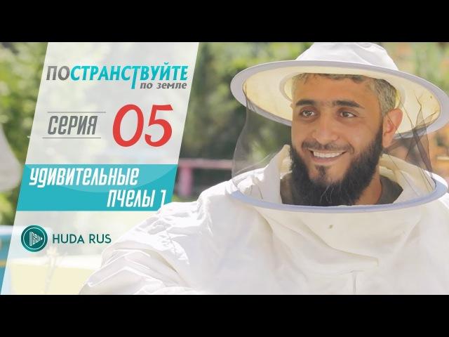 Удивительные пчелы || Постранствуйте по земле || Фахд аль-Кандари 5
