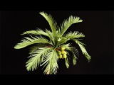 ABC TV How To Make Coconut Tree From Crepe Paper - Craft Tutorial