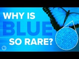 Why Is Blue So Rare In Nature