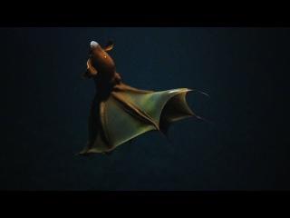 Close Encounter With a Vampire Squid | Nautilus Live
