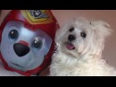 AMAZING SWEET FUNNY SMART CUTE DOGS - Paw Patrol Luggage Trip Bound - The Life of Ketchup