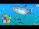 ANIMALS IN THE OCEAN | Nursery Rhymes TV. Toddler Kindergarten Preschool Baby Songs.