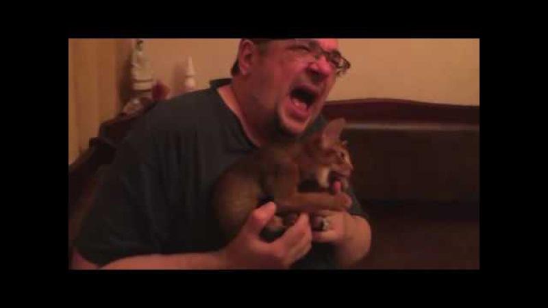 Кошачья жалостливая