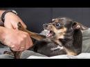 Злые и очень смешные собаки