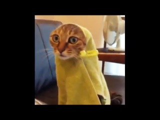 Top 200 Highlights of FUNNY Animals on Vine