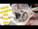 Дикая боль маленького котёнка