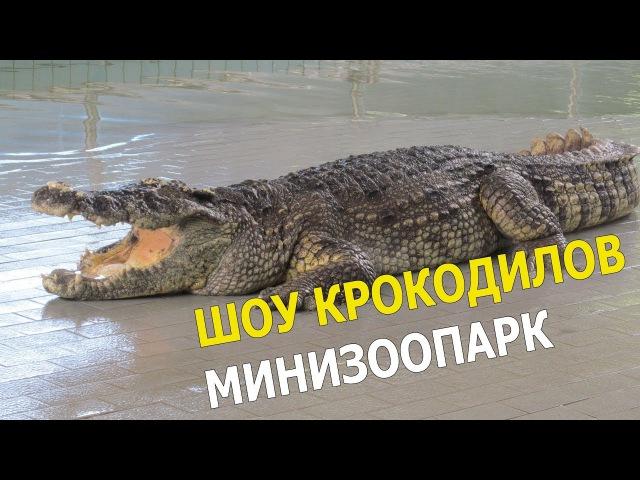 Крокодил шоу || The Million Yers Stone Park Pattaya Crocodile Farm Pattaya Thailand