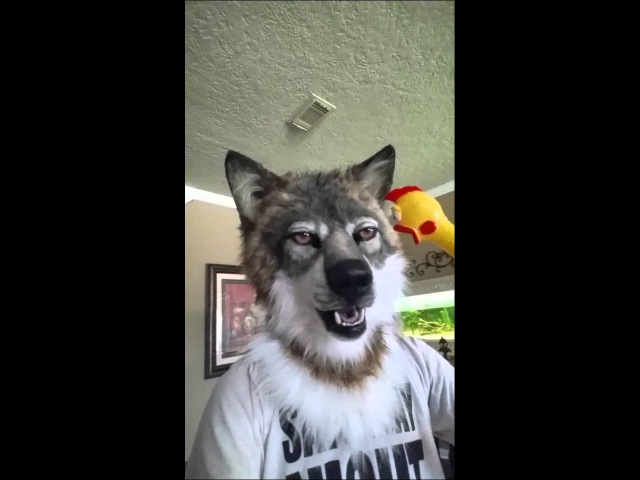 How to scare a wolf with a rubber chicken (SHARE)
