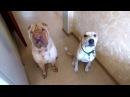 Как перевоспитать агрессивную и неуправляемую собаку