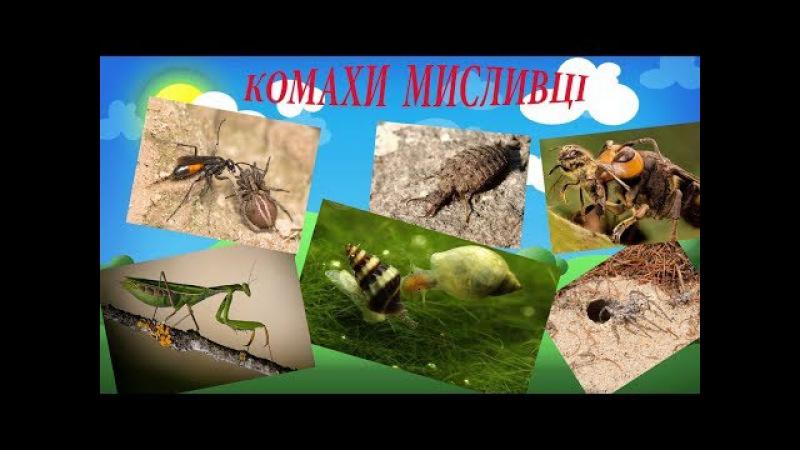 Енциклопедія для дітей. Дивовижні маленькі тварини. Комахи мисливці.