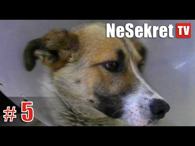 Спасение 5. Собака со сломанной лапой. Часть 2. ПРОДОЛЖЕНИЕ. Город Улан-Удэ