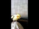 Учим песню Антошка