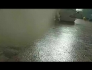 Комната с кисами у которых лейкоз