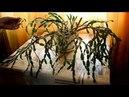 Обрезка рождественника декабриста, шлюмбергеры для пышного цветения