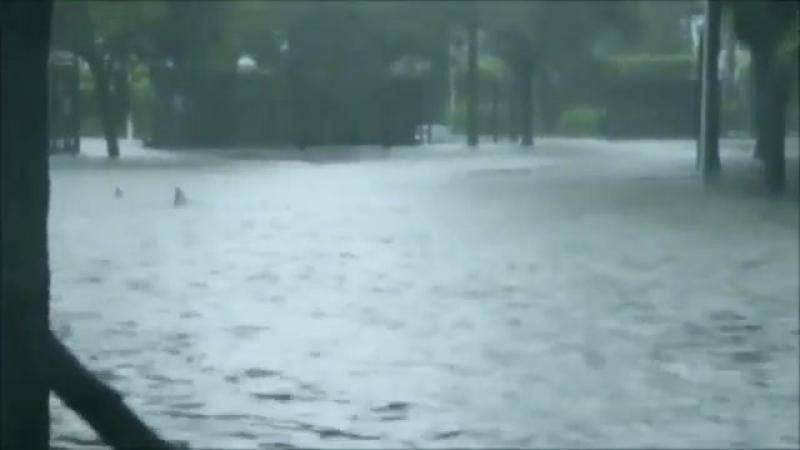 Ничего особенного, просто акулы плавают по центру Майами