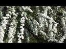 Дача Садовые фигурки в Леруа Косилка Светины покупки для сада бартер продолжается