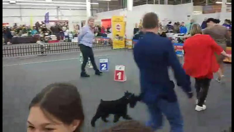 Video-1517197992