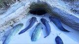 ОБМАНУЛ РЫБУ И ЗАГНАЛ ЕЕ В ДУПЛО ХИТРЫЙ МЕТОД ЛОВЛИ Вот это рыбалка 2018 Ты не поверишь