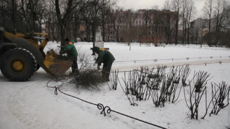 В МО Смольнинское спасают кусты от мороза