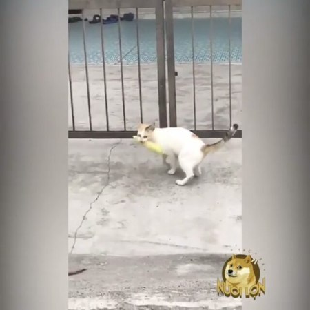 "Animal videos on Instagram ""Life is Hard, Never Give Up😁"""