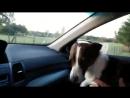 Пёсик ловит кайф, оказавшись в парке для собак