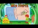 Pixi Wissen TV Mein Körper