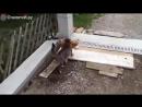 Котик воришка
