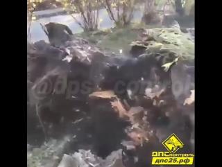 Находка. Сообщение от подписчика: Во Врангеле ночью порывами ветра повалило несколько деревьев.