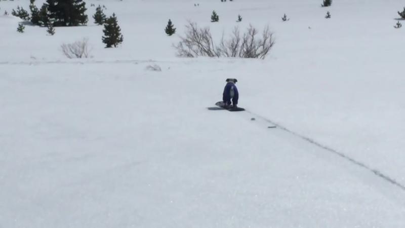Chuey the snowboarding dog