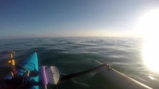 Рыбак на байдарке спас игуану, которую течением унесло в открытое море
