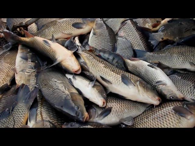 Рыбалка ў Беларусі: шкодная рыба / Прыват   Рыбалка в Беларуси: где, что и за сколько