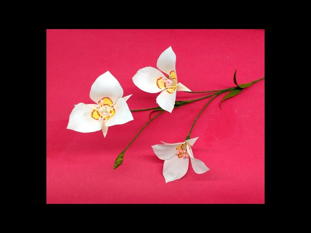How to make Crepe Paper Flowers Sego Lily Calochortus nuttallii (flower 243)