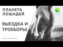 Цикл Планета лошадей   Выездка и Троеборье (4 серия)   Канал Живая планета (эфир от 24.02.2018)