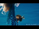 The deadly tentacles of the Portuguese man o' war Blue Planet II Episode 4 Preview BBC One