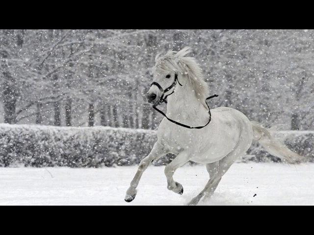 Зимняя сказка - Микаэл Таривердиев