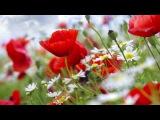 Шикарная Инструментальная Музыка Для Души Музыка Пианино Музыка для Медитации И Релаксации #Piano