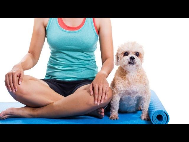 Йога и собака смешное видео. Прикол с собакой 2018