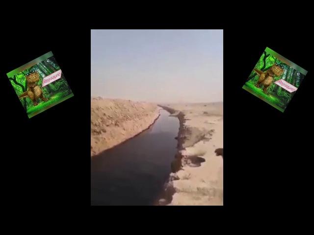 RIOS DE PETRÓLEO EN SIRIA. Ríos de petróleo salen del los suelos de SIRIA