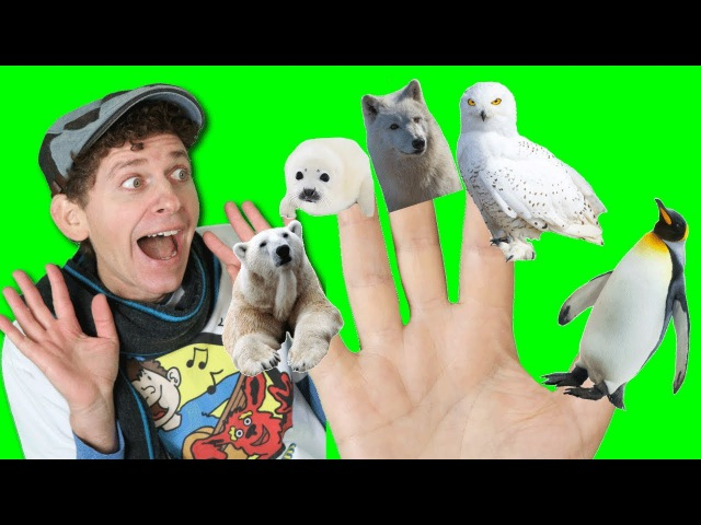 Finger Family Song Winter Animals What Do You See? Animals Songs Learn English Kids