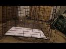 Складная клетка-ловушка для собак. Устройство
