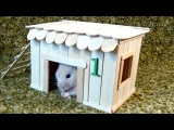 How to Make Little Hamster House  Very Easy &amp Quick DIY