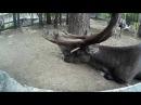 4.Второй день в Новосибирске.Зоопарк.Тусовка на вписке.Автостопом из Оренбурга в